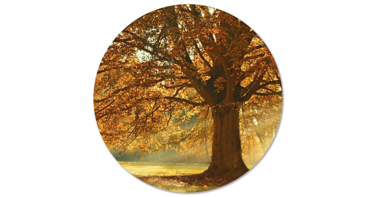 Muurcirkel klein herstboom - Ø 30 cm