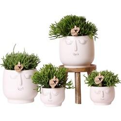 Kolibri Greens | Planten set - Rhipsalis mix - in Happy Face white sierpotten + houten plantenverhoging - potmaten Ø6cm & Ø9cm