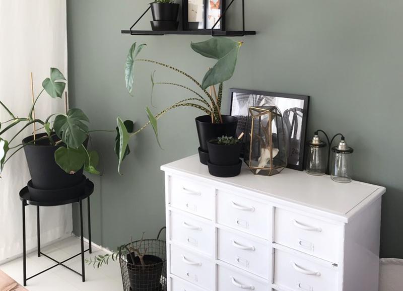 Deze kamerplanten zijn ideaal voor een donker huis met weinig (zon)licht
