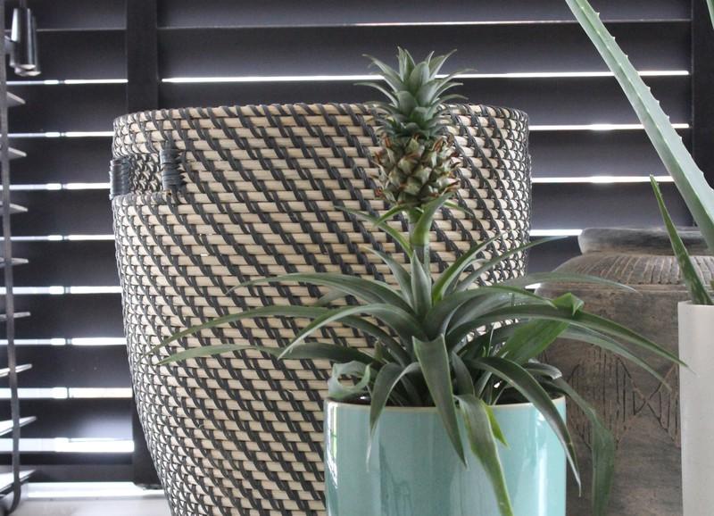 Deze plant helpt tegen snurken!
