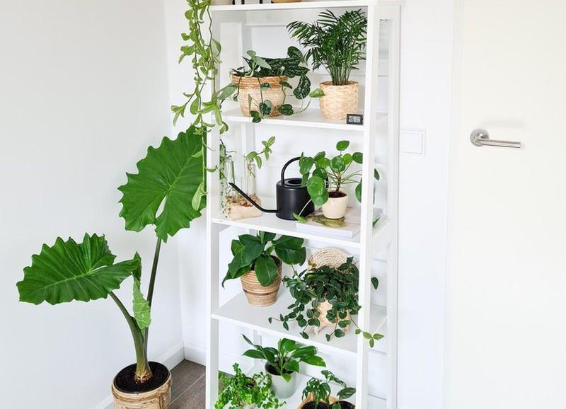 Een plantenkast of -tafel in je interieur
