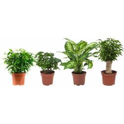 Green Bubble Combi deal - 4x Kekke planten mix