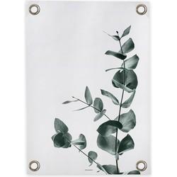 Tuinposter Eucalyptus (50x70cm)
