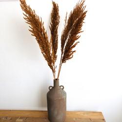 Pampas Pluimen - Droogbloemen Boeket Pampasgras Gedroogd Donker Bruin - 4 stuks 100cm - Dry FLWRS