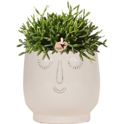 Kolibri Greens | Groene plant - Rhipsalis Baccifera in sierpot Happy Face white- potmaat Ø9cm