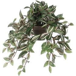 Mica Decorations tradescantia hangend groen in pot stan grijs maat in cm: 45 x 25