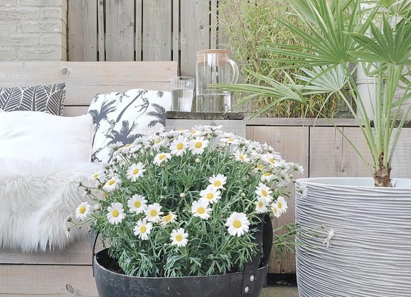 Budget shopping: de leukste plantenbakken voor jouw bloemen en planten