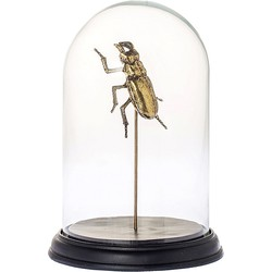 Riverdale Bug Stolp Metaal/Glas Goud - 27 cm