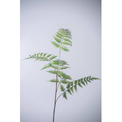 Leather Fern 106 cm