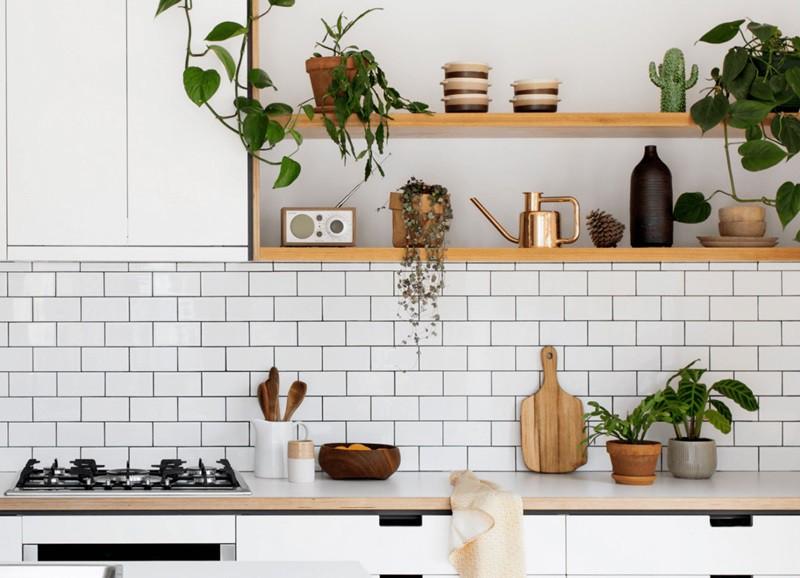 Bewezen: deze planten verwijderen kookluchtjes in huis