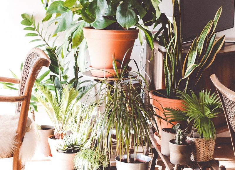 Dit zijn de top 5 luchtzuiverende planten van het moment