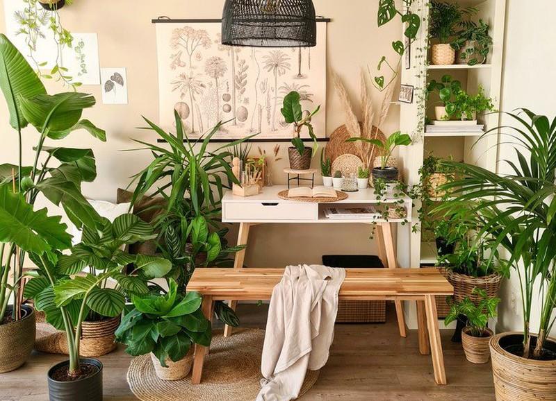 6x planten die voor een lekkere geur in huis zorgen