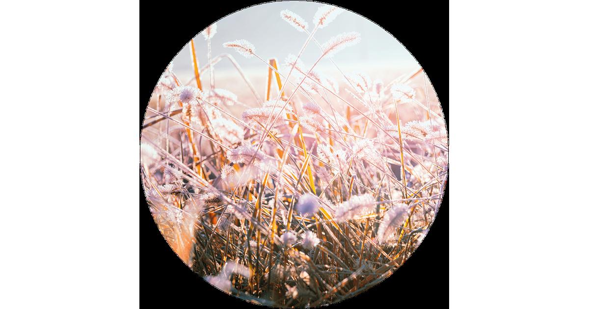 Muurcirkel klein winter morning flower - Ø 40 cm