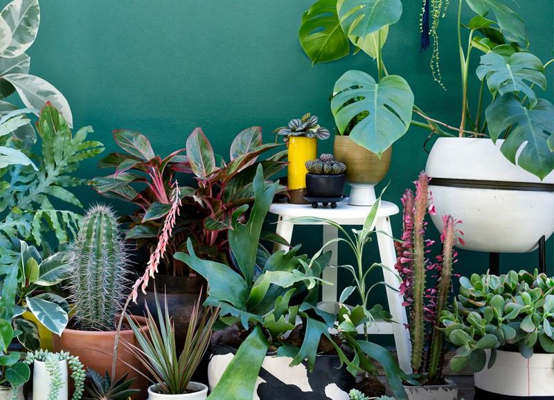 Deze 5 planten kun je beter in huis halen dan de cactus