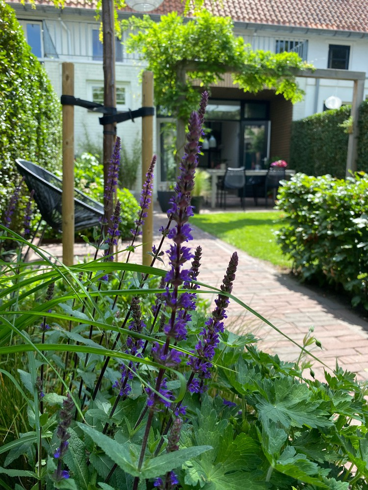 bloemen bloeitijd planten tuin paars