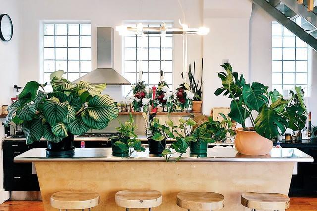 Deze goedkope planten doen het goed in ieder interieur