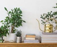 Zimmerpflanzen für alle ohne grünen Daumen