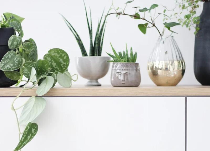 5x creatieve alternatieven voor plantenpotten