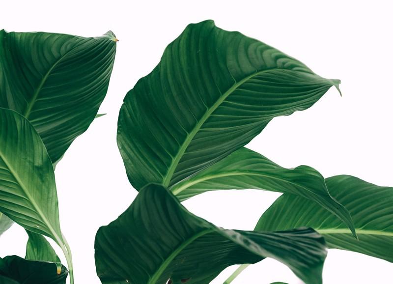 Dit moet je weten over planten in je interieur