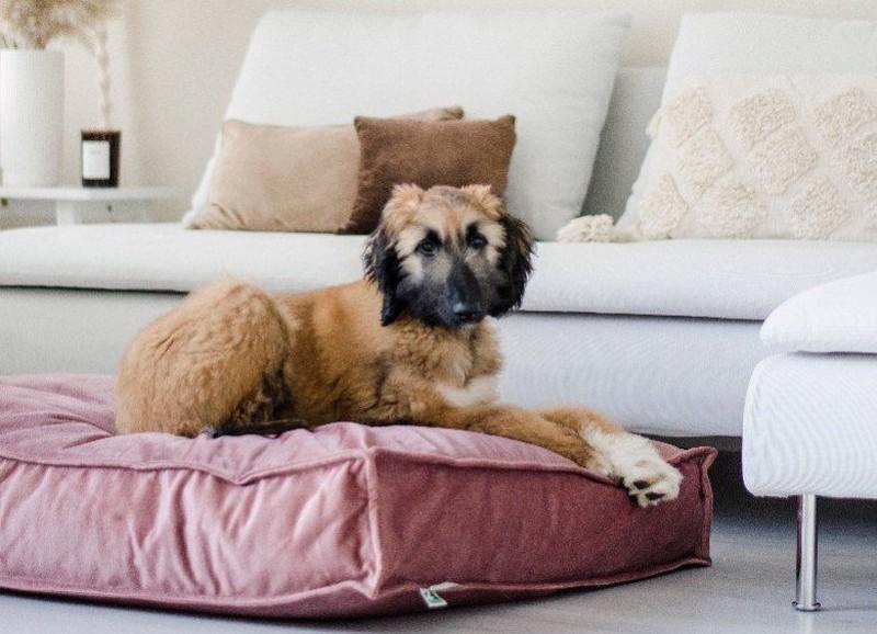 Een hondvriendelijk interieur zonder in te leveren op stijl