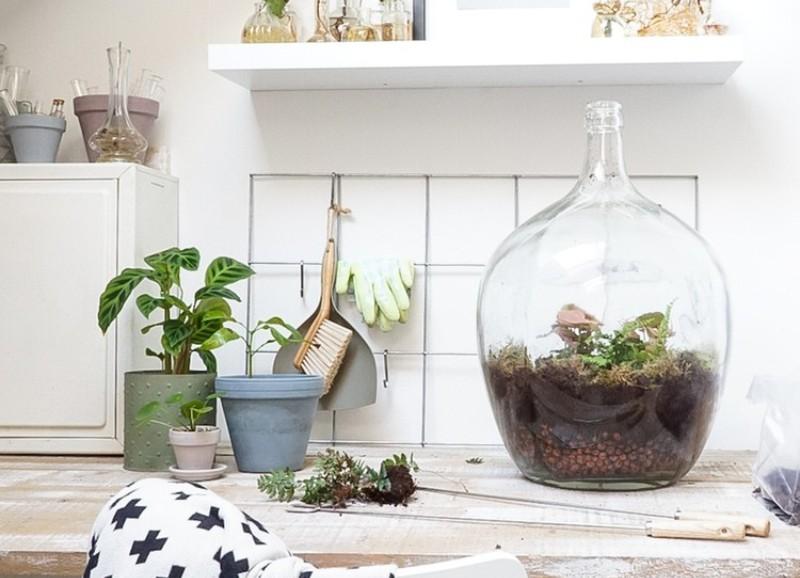 DIY: zo maak je je eigen planten terrarium
