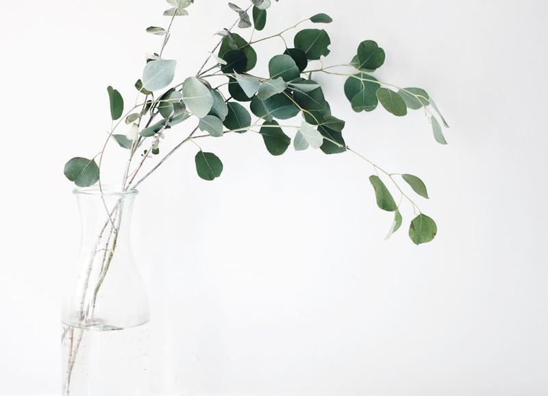 Met deze tips geef je je bijna dode plantje een laatste kans