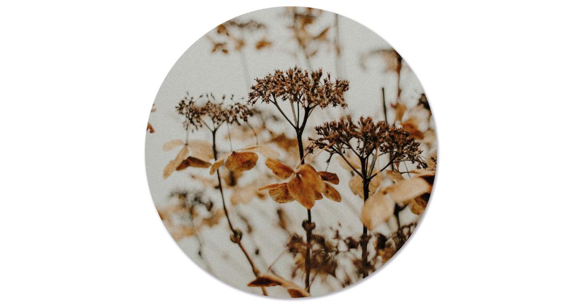 Muurcirkel klein droogbloem - Ø 30 cm