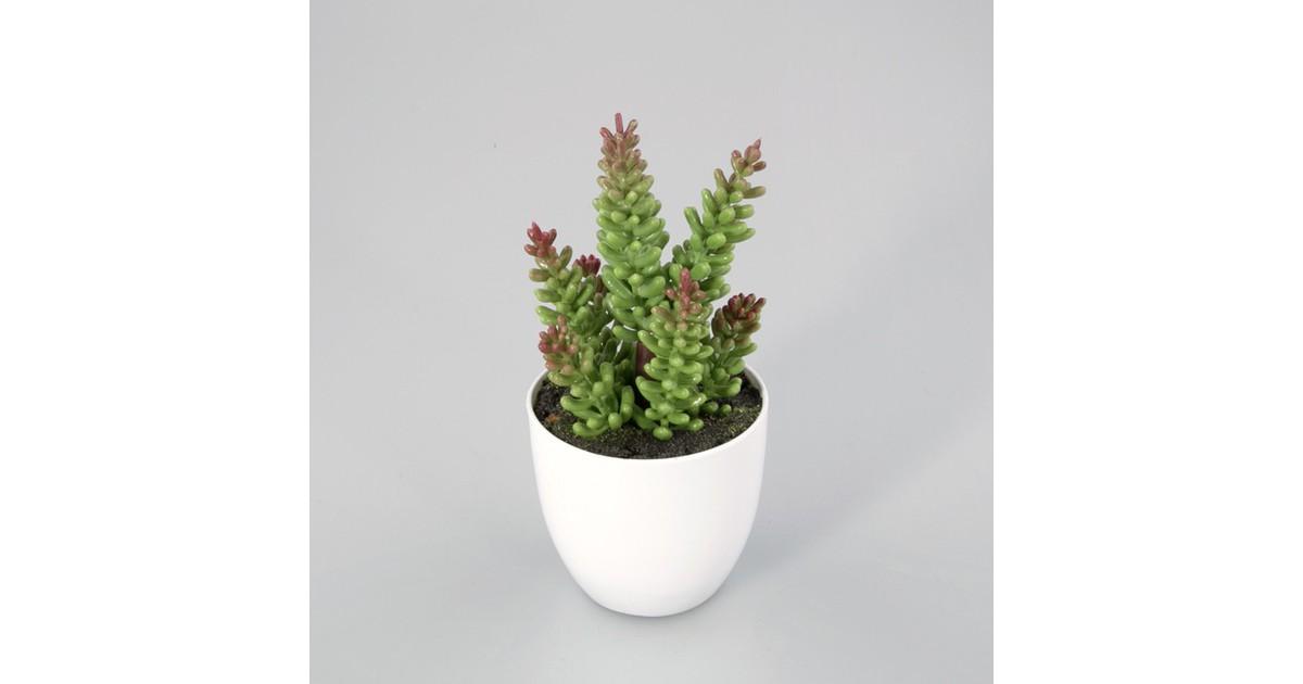 Plantje in kunststof pot Rocky