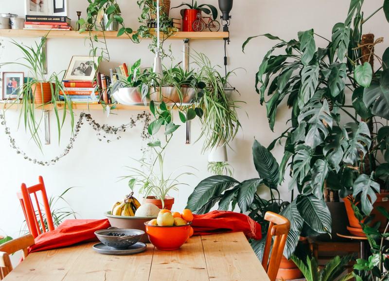 Ben je vaak gestrest? Schaf deze kamerplanten aan!