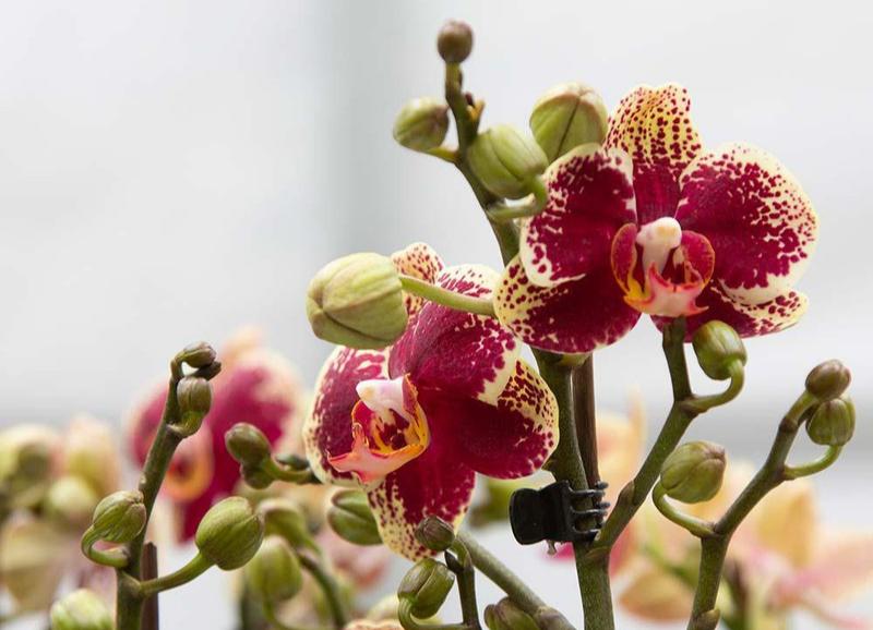 Trending: orchideeën in huis!