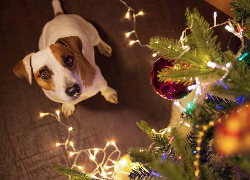 Tips om je kerstboom huisdier proof te maken