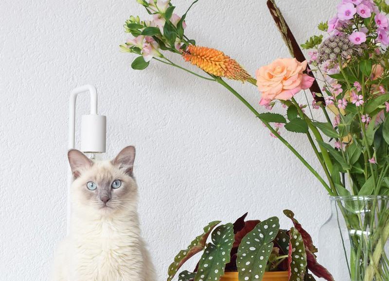 5 tips waardoor je bloemen langer blijven leven