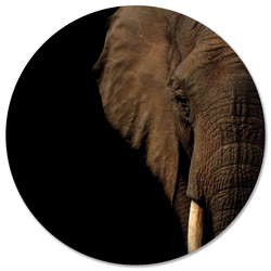 Muurcirkel olifant hoofd - Ø 80 cm