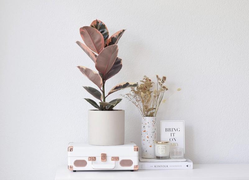 Deze planten zijn écht roze (en wil je nu hebben)!