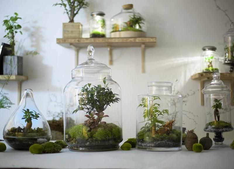Interieurtrend: planten terrarium