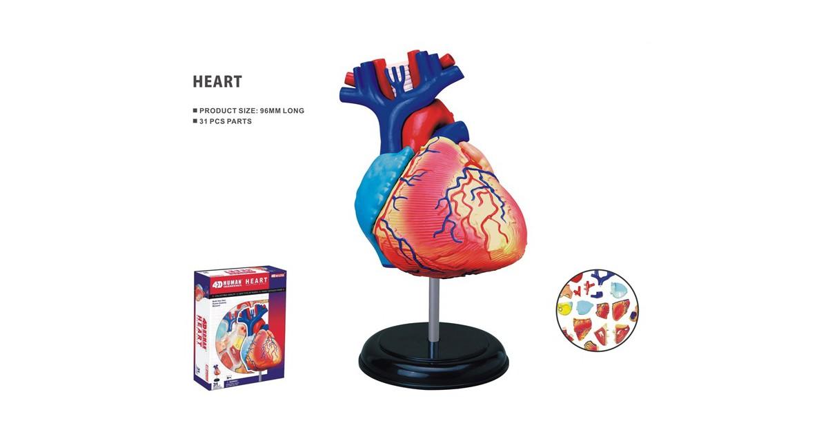 Educatief Speelgoed Anatomie model hart - 4D educatieve puzzel