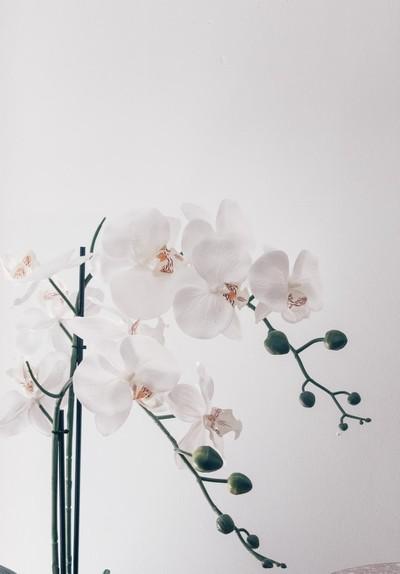 Trend: orchideeën in huis