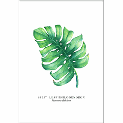 Monstera Leaf (29,7x42cm)