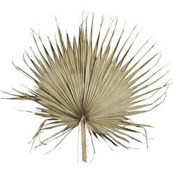wanddecoratie palm waaier ø60