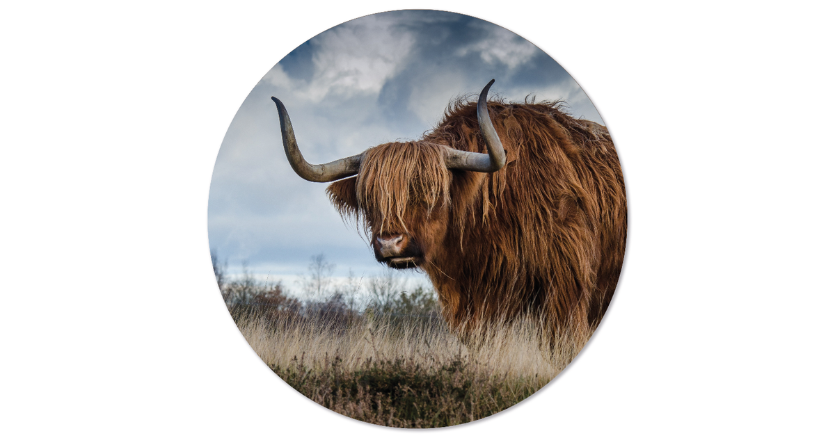 Muurcirkel klein buffel - Ø 20 cm