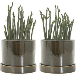 Crassula Harmony incl. 'Deep forest' pot - set van 2