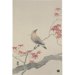 Waxwing Poster Xl
