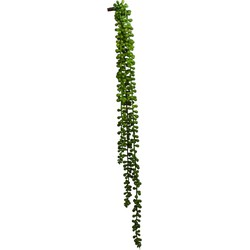 Senecio hanger 70cm