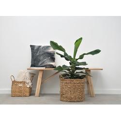 Bananenplant - 100cm