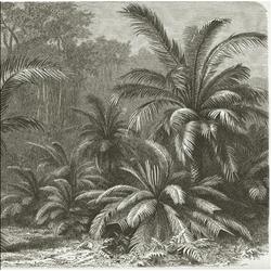Palmvarens of cycadeeën - levende fossielen - 260x260 cm (BxH)