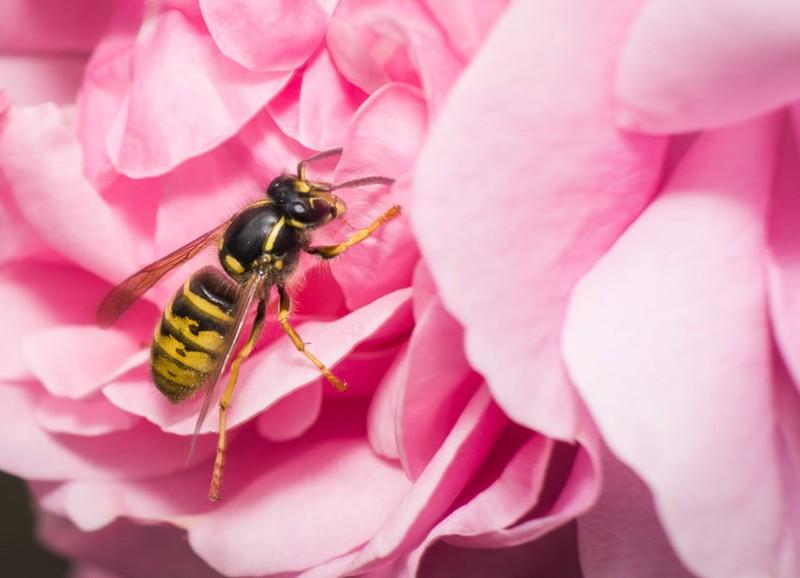 Wat je kan doen als je last hebt van wespen