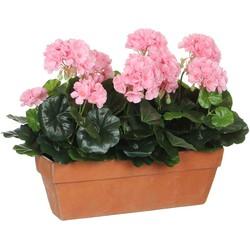 Mica Decorations geranium roze in balkonbak terra maat in cm: 39 x 13 x 40