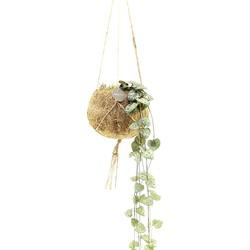 Floraya  - Chinees Lantaarnplantje | Ceropegia String of Hearts  - Kamerplant in Kokodamas kokosvezel hangpot ⌀12 cm - ↕10-15 cm