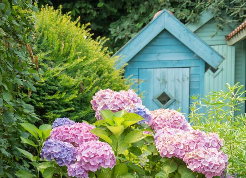 Een echte eyecatcher: de hortensia in je tuin