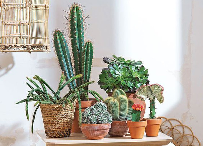 Welke plant past bij jou en je interieur? Doe de test!